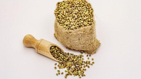 sementes de cânhamo